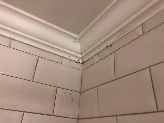 Mould over bathtub
