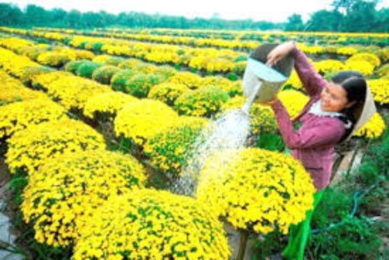 flower village in Mekong delta Vietnam