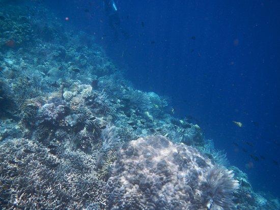 Safari Tours & Travel: Corals during snorkelling