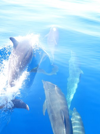 Beautiful and playful dolphins