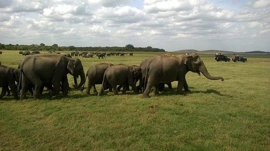 Exploration Travel Sri Lanka: Udawala Wild Life Safari