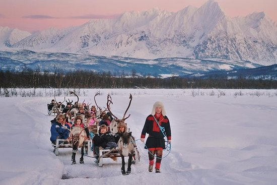 Reindeer Sledding and Sami Culture...
