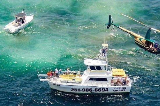 Crociera dei delfini nella costa del