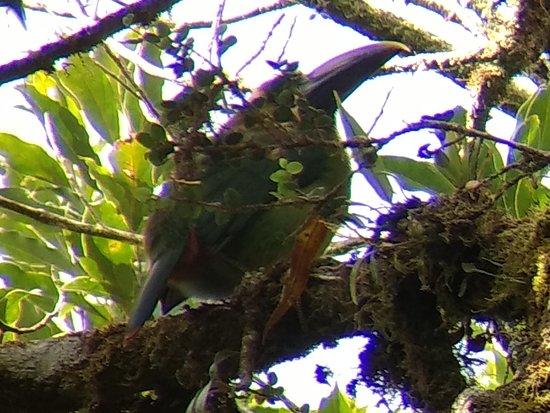 Фотография Monteverde Cloud Forest Biological Reserve