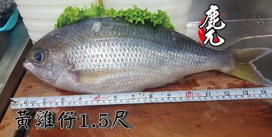 深海魚-黃雞仔