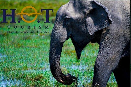 Katunayake, Srí Lanka: H.O.T Destination Insider