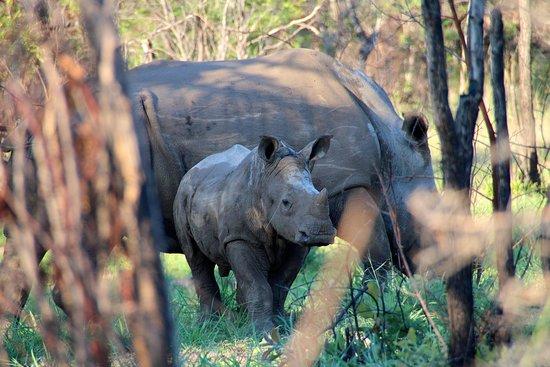 Nyuchi Safaris