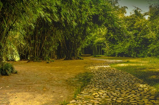 中国安徽省舒城县,飞霞公园.  A stone walking trail with bamboo trees at Feixia Park in central Shucheng, Anhui Province, China.