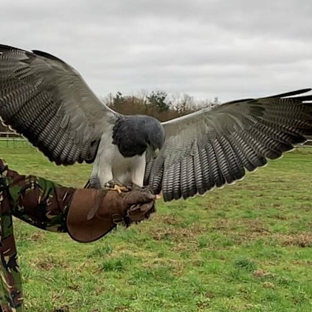 Amazing eagles and hawks experience. Been a few times now and can't recommend it enough. Will be booking again soon