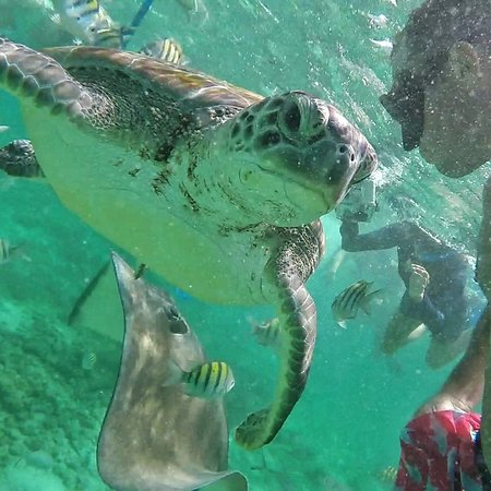 Tortuga Expeditions