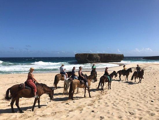 Rancho Loco: Thanks for choosing to ride with us! We welcome your feedback! #aruba #horsebackriding #beach #tripadvisor www.rancholocoaruba.com