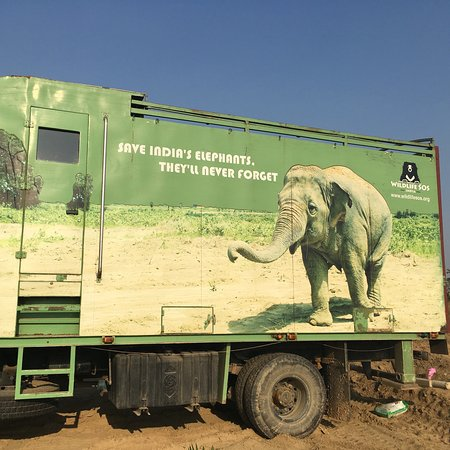 A true sanctuary for formerly abused captive elephants