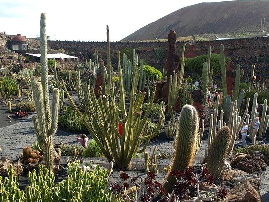 Jardin de Cactus: Guatiza - Jardín de Cactus - Lower Garden Area