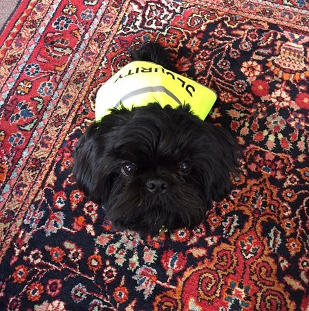 Harry, The Lyndhurst Antique Centre's resident Guard Dog!!!