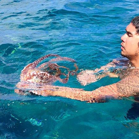 Kauai Sea Tours Photo
