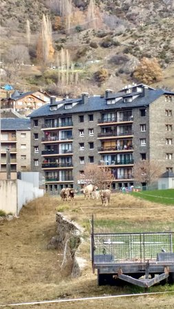These guys were Mooo-ving to lower altitudes for the winter. This small grassed area adjacent to the hotel gave temporary feeding for the bovines meant that the Alpine cow bells around their necks gave a that noise you`d expect from these mountain farmlands.