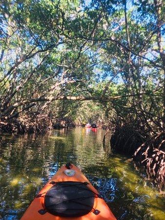 Kayaking through one of several mangrove tunnels at Lido Key.