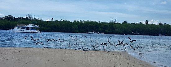 Padee Again Fishing Charters