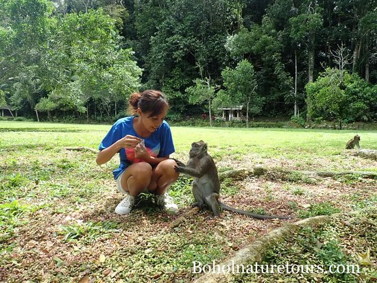 Bohol Province, Filipinas: bohol tour monkey