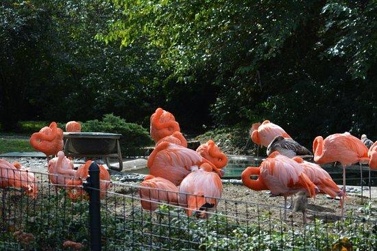 Columbus Zoo and Aquarium: Columbus Zoo