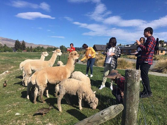 Lake Tekapo Farm Tours