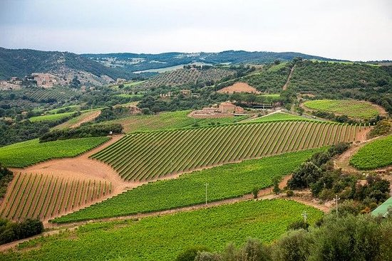 The Complete Wine Tour Brunello...