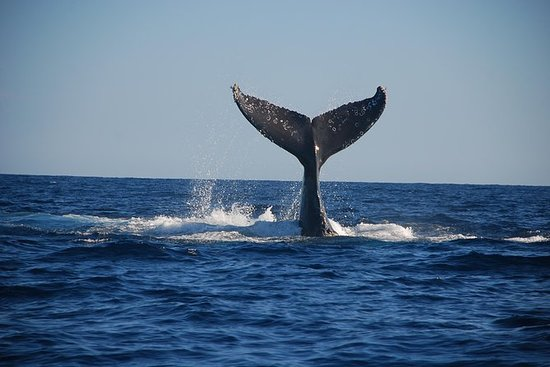 Cabo San Lucas Whale Watching...