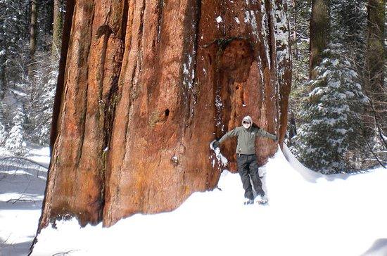 Giant Sequoia Snowshoe and Yosemite...