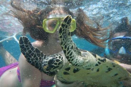 Mystery Island Snorkeling Tour