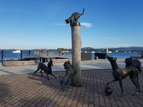 ‪Hairy Maclary & Friends Tauranga Waterfront Sculpture‬