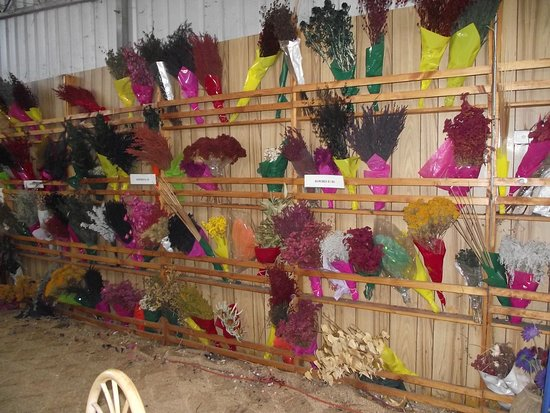 Dried flowers for sale