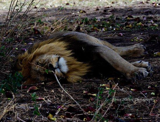 Serengeti National Park, Tanzania: Great Photo safari