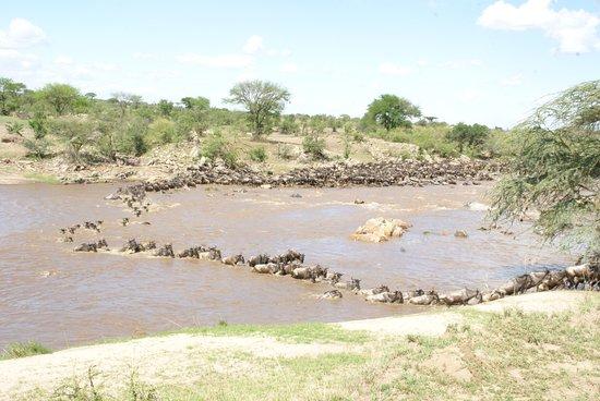 Serengeti National Park, Tanzania: Mara River crossing