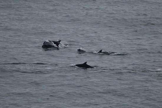 Full-Day Highland Mystery Tour from Aberdeen: Pod of dolphins playing below the castle