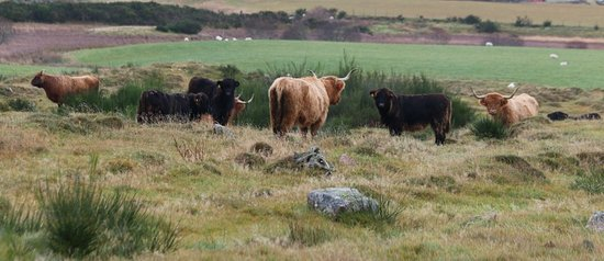 Full-Day Highland Mystery Tour from Aberdeen: Highland cows