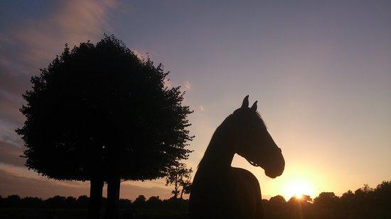 Veel paarden en ruiters in de omgeving
