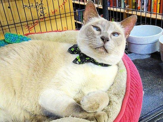 Enola, PA: squeekie the bookstore kitty