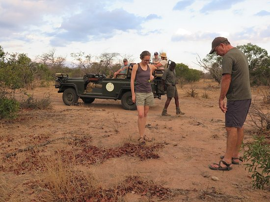 Spirited Adventures: Luxury Safari, Greater Kruger National Park, South Africa