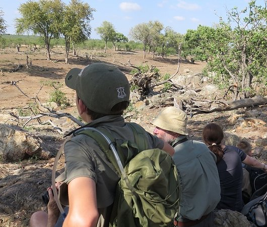 Spirited Adventures: Walking Safari, Greater Kruger National Park, South Africa