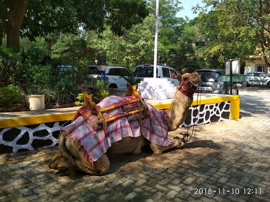 MTDC Karla: Saw camel ride option at reception area