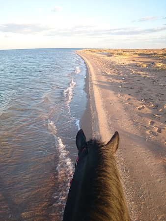 YallaHorse Riding: Black Beauty Gallop by the Red Sea.