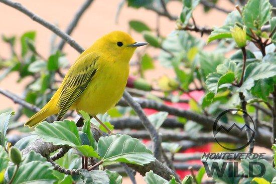 Monteverde Wild 사진