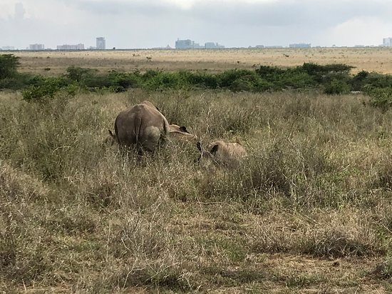 Day Tour: Giraffe Center, Elephant Orphanage and Nairobi National Park: Park animals with the Nairobi in the background.
