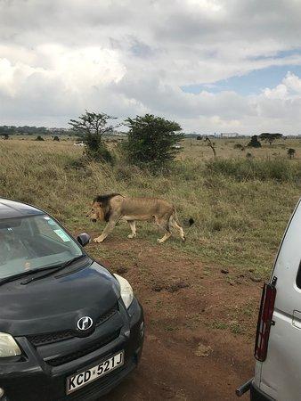 Day Tour: Giraffe Center, Elephant Orphanage and Nairobi National Park: Lion, lion here you come