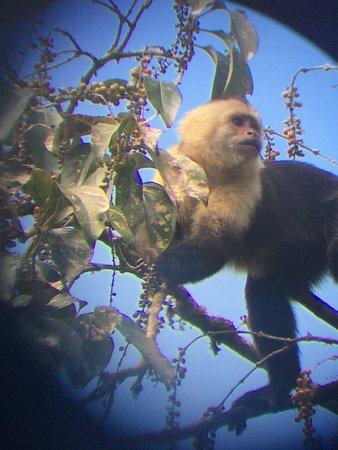 Monteverde Cloud Forest Biological Reserve: Monkey