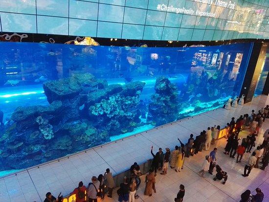 acquario gigante