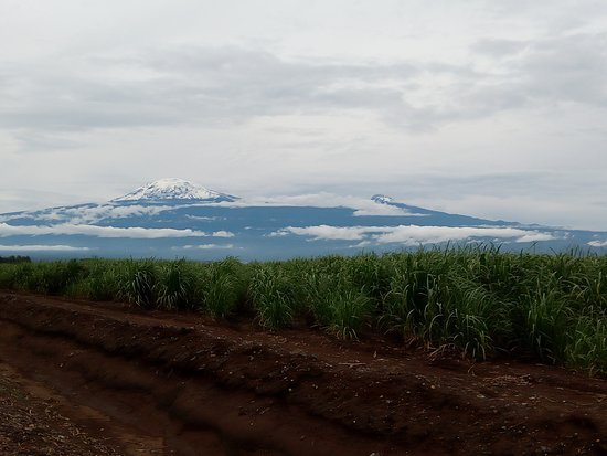 Kili Taxi Services: Beautiful view of the Mt. Kilimanjaro