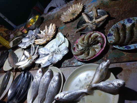 Mangrove Tourist Complex: Various other fishes @bakkhali beach