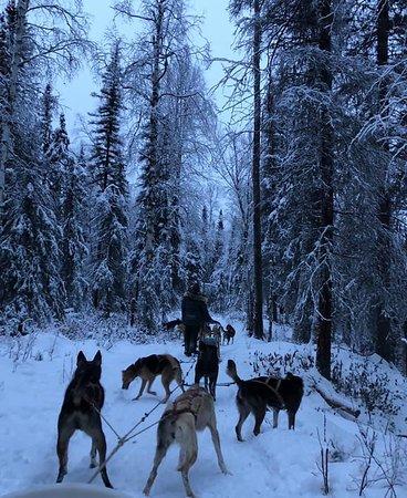 Greatland Adventures: Dog sledging