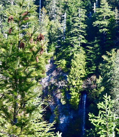 Pine Cones, Trees and a waterfall.